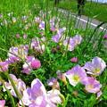 写真: 見守るお花たち・・