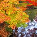 写真: 晩秋の装い