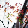 街角の紅葉