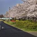 写真: 漫活信濃川畔