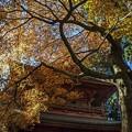 写真: 秋憶