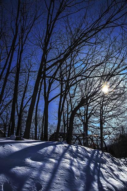 写真: 冬季烈日