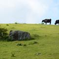 写真: 放牧地