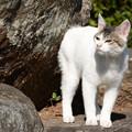 写真: 竹崎の猫