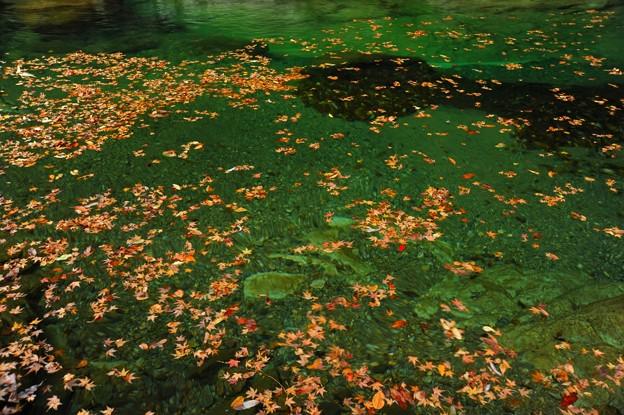 流れを往く秋