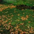 写真: 流れを往く秋
