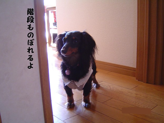 Photos: チョコちゃん