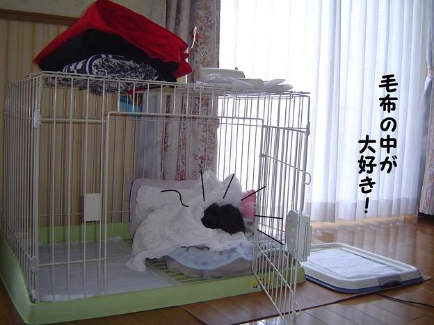 Photos: チョコちゃんのお部屋 008