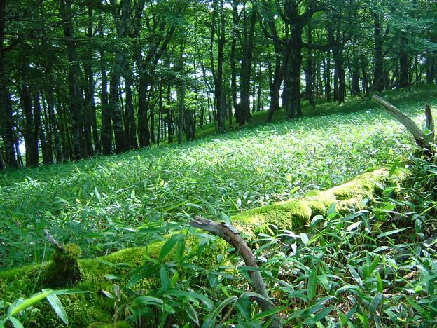200807121509SAT_Oodaigahara_02