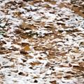 落ち葉に雪