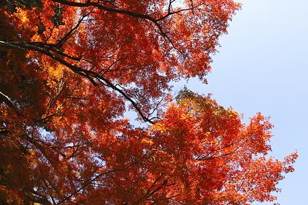 野毛山の紅葉(2)