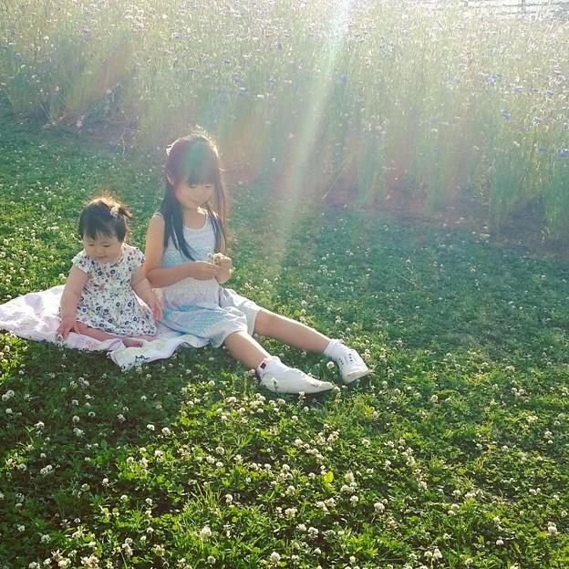 写真: お花つみ