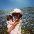 写真: ネモフィラ畑