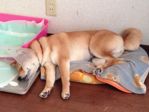 Photos: どこででも寝る