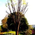 赤羽西口 緑道公園 木