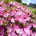 写真: H29.5.28庭園
