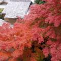 写真: 紅葉の見頃がやってきた!