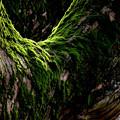 苔むす紫峰杉