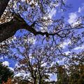 写真: 秋の日