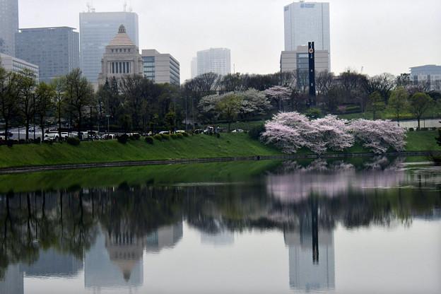 Photos: 都心の桜
