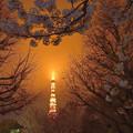 写真: 霧雨に煙る