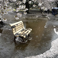 写真: 雨の新宿御苑
