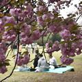 八重桜の下で