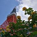 薔薇とタワー