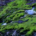 写真: チャッボミゴケの渓流