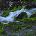 写真: 苔の渓谷