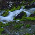 Photos: 苔の渓谷