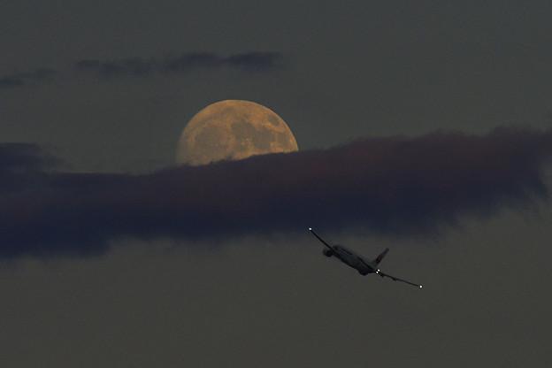 写真: 満月に向って