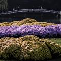 第二路地花壇