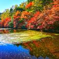 写真: 白駒の池「HDR」