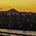 写真: 展望「船堀タワー」