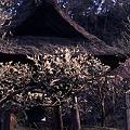 早春の東慶寺