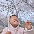 写真: すてきな傘