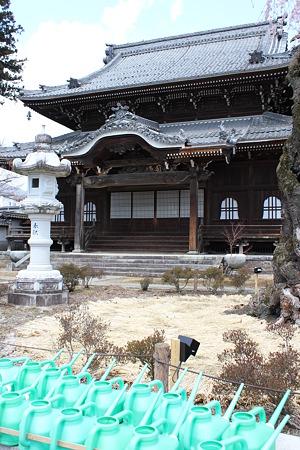 飯田の寺の桜5