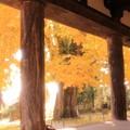 喜多方 熊野神社の大銀杏