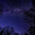 写真: 春の夜に