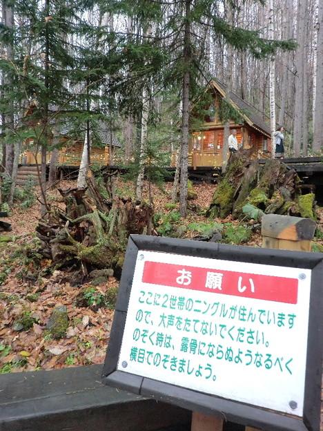 富良野・ニングルテラスにて(2014年).3