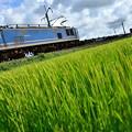 Photos: 青い空と,青い機関車