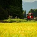 黄色い稲穂と赤い車両