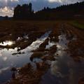 写真: 田んぼは来春までお休み