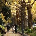 写真: R0031930 - 素敵な秋♪