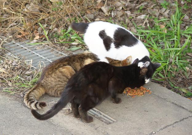 お屋敷猫さんも全員集合