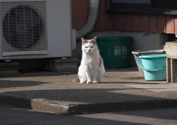 井戸掘り屋さんの猫さん