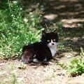 写真: 散歩道のうし柄仔猫ちゃん