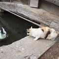 写真: 鯉の方がイイニャ(^^)