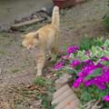 お花の似合う猫さん